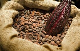 Таблетками из какао-бобов будут лечить инфаркты и инсульты