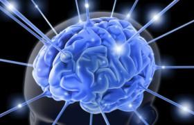 Правое и левое полушария мозга: друзья и антиподы