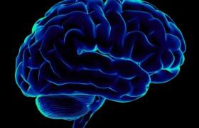 Функционально мозг начинает стареть уже после 24 лет