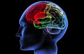 Визуальная система мозга обрабатывает и звуки