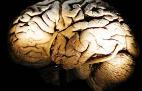 Обнаружен ген, который отвечает за умственные способности