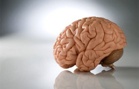 Прогулки пешком развивают мозг