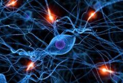 Ученые продвинулись в изучении проблемы аутизма