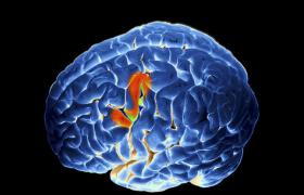 Медитация усиливает нейронную активность