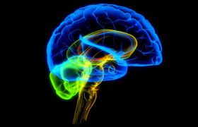Ученые установили связь между ошибками человека и фоновыми шумами мозга