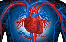 При здоровом сердце – сильный мозг!