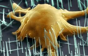 Стволовые клетки имеют потенциал для восстановления повреждений мозга