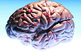 Ученые разработали новое лекарство от эпилепсии