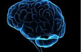 Человеческому мозгу можно сохранить молодость: уверены эксперты