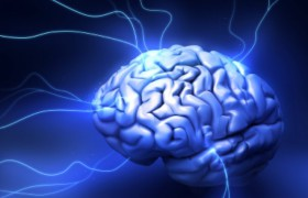Стресс приводит к усыханию мозга