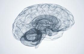 Стало известно, чем именно женский мозг отличается от мужского