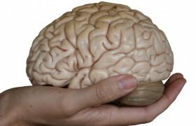 Установлена обитель страха в мозге