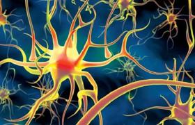 Новые клетки мозга стирают старые воспоминания