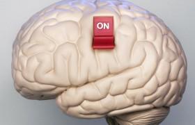 Учеными обнаружена часть мозга, отвечающая за совесть