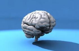 Мозг человека способен жить до 200 лет