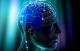 Учеными обнаружена нестареющая часть головного мозга