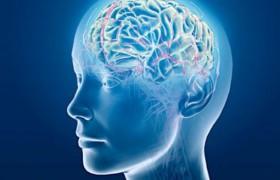 Мозг человека начинает стареть уже в 24 года