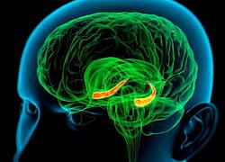 Когнитивные нарушения повышают риск инсульта