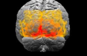 Ученые: честность зависит от изменений в коре головного мозга