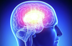 Мозг человека может привыкать к здоровой пище, доказано учеными