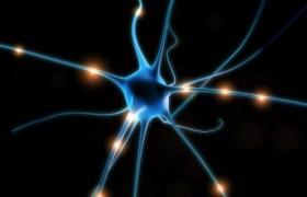 Портреты голливудских «звезд» помогли прояснить работу головного мозга