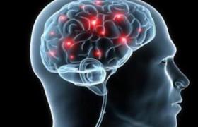 Состав микробиома влияет на фенотип иммунных клеток при рассеянном склерозе