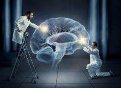 Ученые провели пересадку памяти