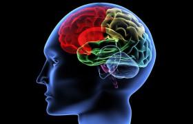 Почему мозговой ствол главный в восстановлении после инсульта