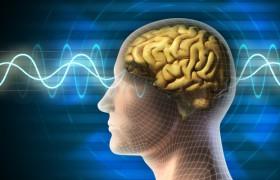 Ученые: после 40 лет объем мозга человека начинает уменьшаться