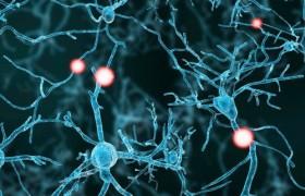 Стволовые клетки человека устранили симптомы паркинсонизма