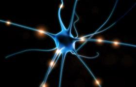 Ученые открыли клетки мозга, ответственные за новые области памяти