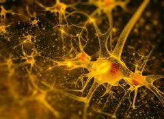 Головокружительная «карьера»: из клеток кожи – в клетки мозга