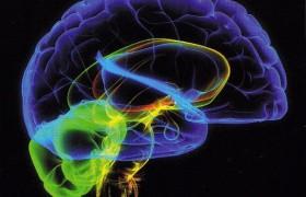 10 фактов о мозге человека