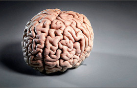 Многократные закрытые черепно-мозговые травмы значительно ухудшают способность нейронов к естественному самовосстановлению