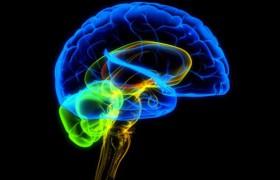 Изменения в мозге супругов после рождения первенца почти неразличимы