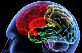 Как читать мозговую активность?