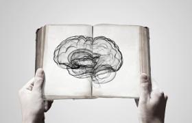 Мужской и женский мозг по-разному воспринимает эмоции