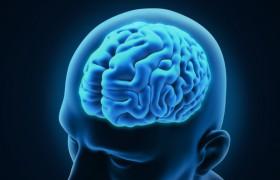 Американские ученые обнаружили в мозге человека переключатель жажды