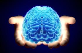 Мозг мужчин и женщин имеет больше сходств, чем различий