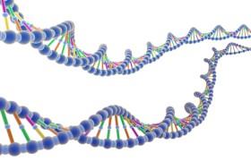 Ученые выяснили, что «ген ума»продлевает жизнь