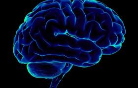 Установлена связь между размером мозга и количеством друзей