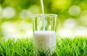 Ученые установили, что молоко повышает уровень антиоксиданта в мозге человека