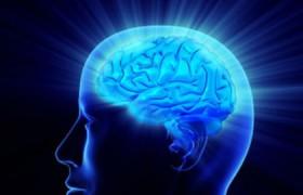 Ученые: Развитие мозга управляется эпигенетическим фактором
