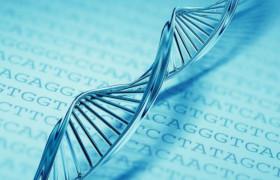 Томскими медиками выявлен ген, влияющий умственную отсталость