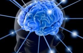 Без жира в мозгу человек никогда бы не стал разумным