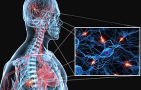 Ученые обнаружили спусковой крючок рассеянного склероза