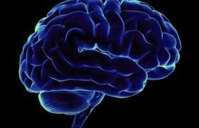 Удары по голове уменьшают мозг