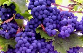Вещество в винограде предотвращает потерю памяти