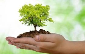 Загрязненная окружающая среда уменьшает объем белого вещества