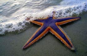 Морские звезды помогают в лечении инсульта